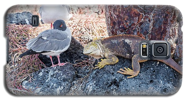 Swallow Tailed Gull And Iguana On  Galapagos Islands Galaxy S5 Case
