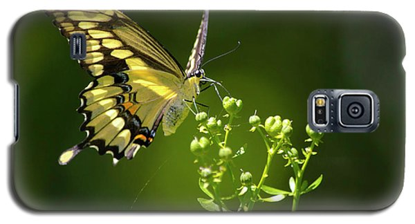 Galaxy S5 Case featuring the photograph Elegant Swallowtail Butterfly by Christina Rollo