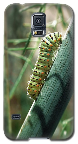 Galaxy S5 Case featuring the photograph Swallowtail Caterpillar by Meir Ezrachi