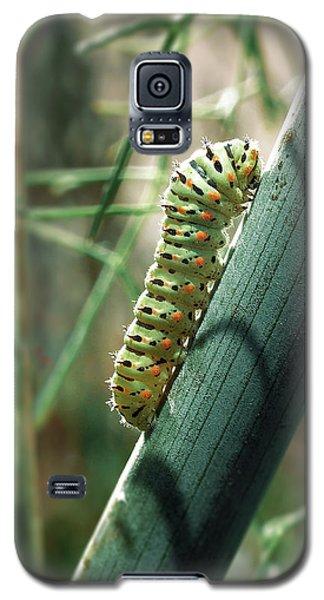 Swallowtail Caterpillar Galaxy S5 Case by Meir Ezrachi