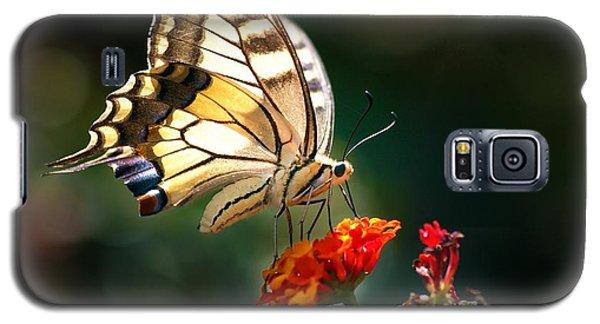 Swallowtail Galaxy S5 Case by Meir Ezrachi