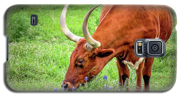 Texas Longhorn Grazing Galaxy S5 Case