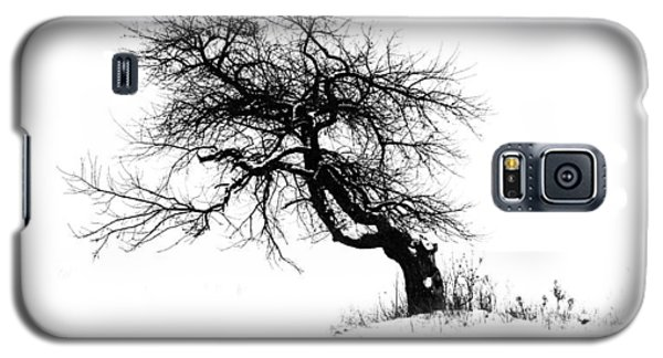 The Apple Tree Galaxy S5 Case
