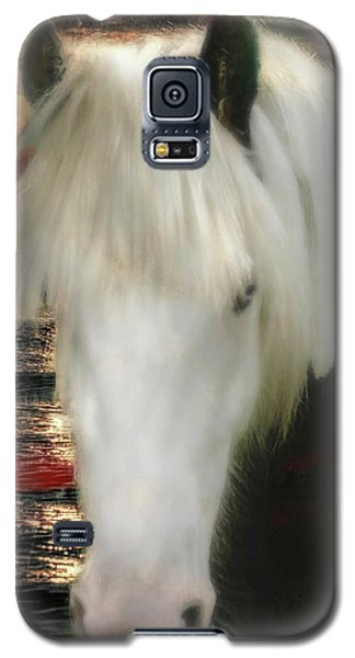 The Beautiful Face Of A Gypsy Vanner Horse Galaxy S5 Case