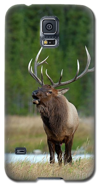 Galaxy S5 Case featuring the photograph The Challenger by Sandra Bronstein