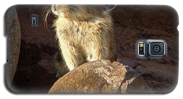 The Coast Is Clear Wildlife Photography By Kaylyn Franks Galaxy S5 Case