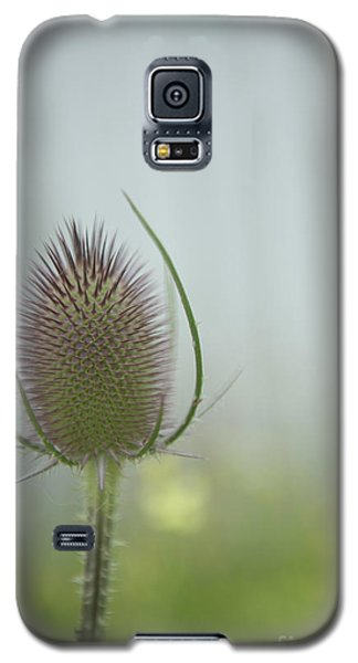 Thistle Galaxy S5 Case