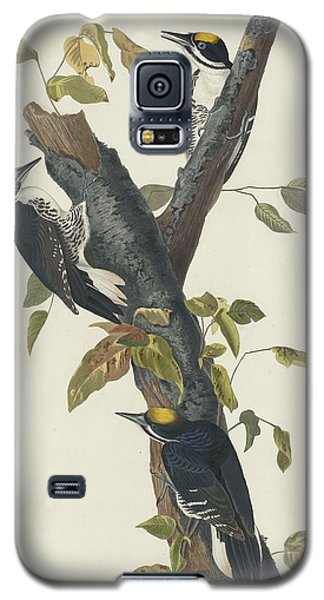 Three-toed Woodpecker Galaxy S5 Case
