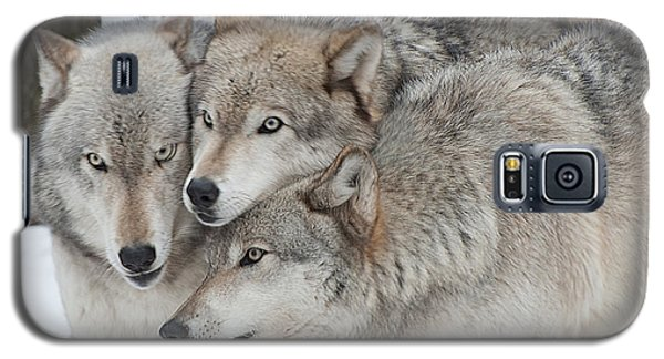 Three Wolves Are A Crowd Galaxy S5 Case by Gary Slawsky