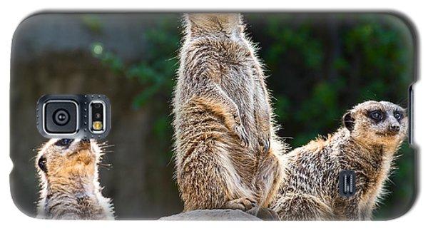 Three's Company Galaxy S5 Case by Jamie Pham