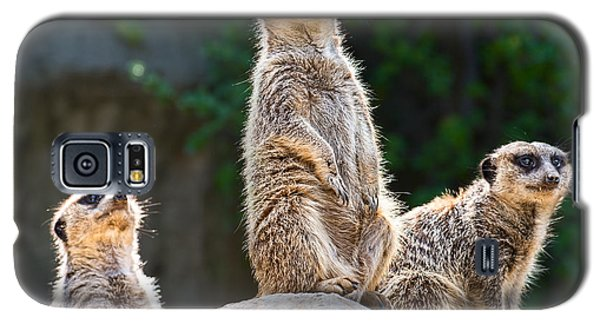 Three's Company Galaxy S5 Case by Jamie Pham