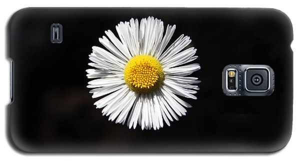 Tidy Fleabane Galaxy S5 Case