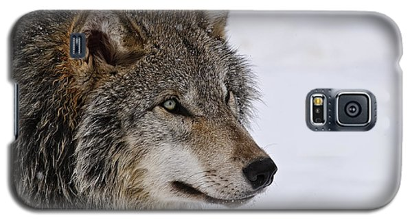 Galaxy S5 Case featuring the photograph Timber Wolf by Michael Cummings