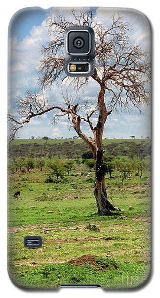 Galaxy S5 Case featuring the photograph Tree by Charuhas Images