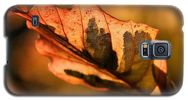 Tri-color Beech In Autumn Galaxy S5 Case