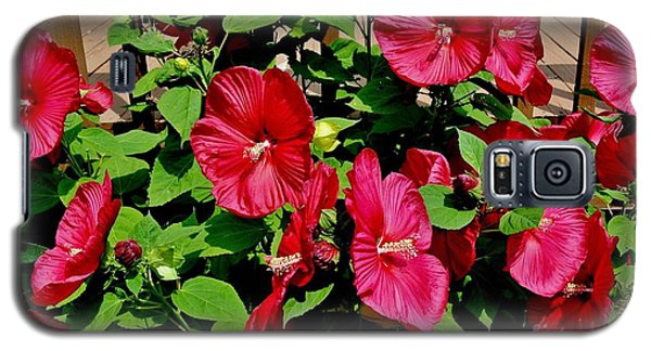 Tropical Red Hibiscus Bush Galaxy S5 Case