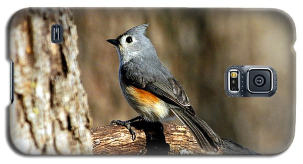 Tufted Titmouse On Branch Galaxy S5 Case