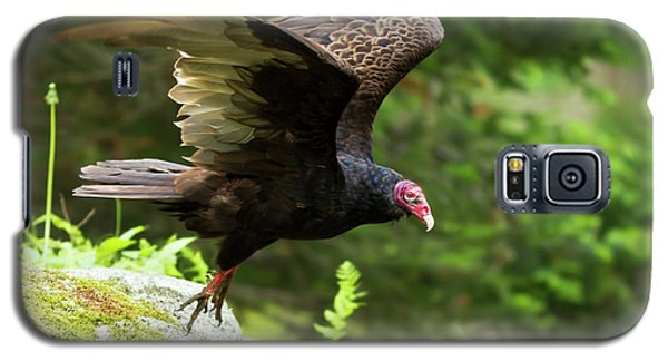 Galaxy S5 Case featuring the photograph Turkey Vulture by Mircea Costina Photography