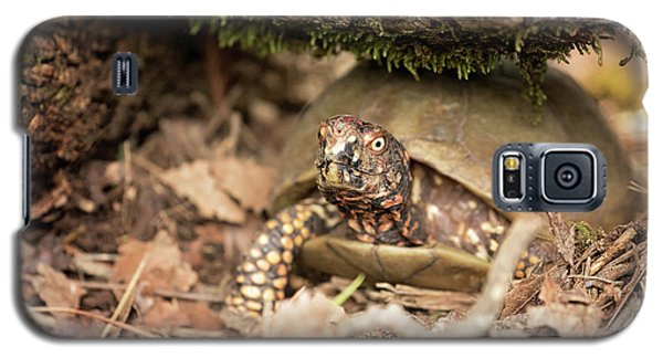 Turtle Town Galaxy S5 Case