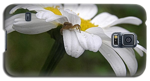 Galaxy S5 Case featuring the photograph Umbrella For A Spider by Angie Rea