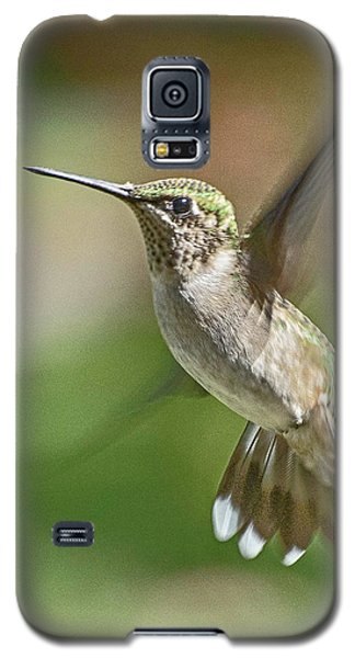 Untitled Hum_bird_five Galaxy S5 Case