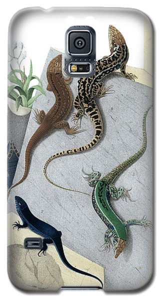 Varieties Of Wall Lizard Galaxy S5 Case by Jacques von Bedriaga