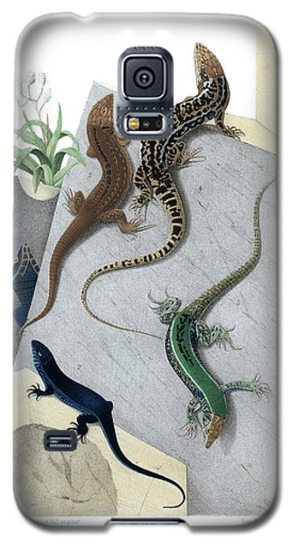 Galaxy S5 Case featuring the drawing Varieties Of Wall Lizard by Jacques von Bedriaga