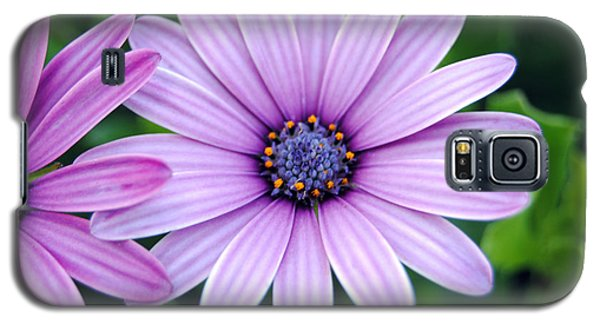 The African Daisy 3 Galaxy S5 Case