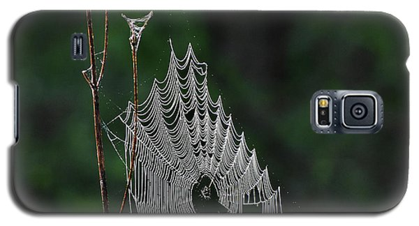 Galaxy S5 Case featuring the photograph Webs We Weave by Skip Willits