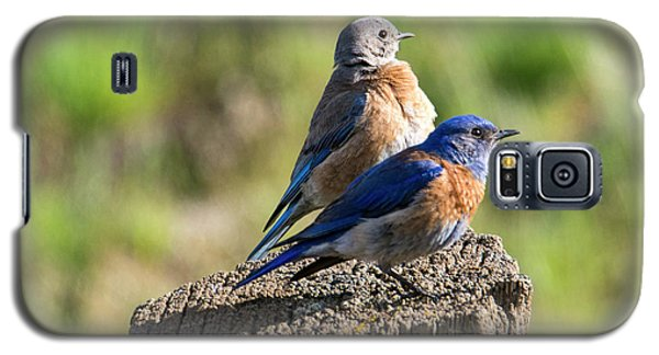 Western Bluebird Pair Galaxy S5 Case by Mike Dawson