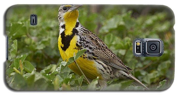 Western Meadowlark Galaxy S5 Case by Doug Herr