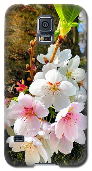 Food And Beverage Galaxy S5 Case - White Apple Blossom In Spring by Matthias Hauser