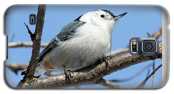 White-breasted Nuthatch Galaxy S5 Case by Ricky L Jones