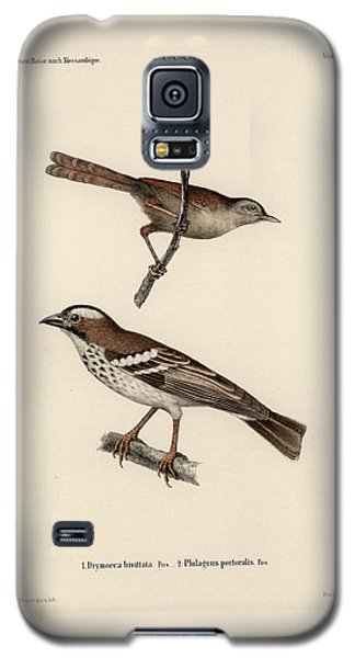 White-browed Sparrow-weaver And Grass Or Bush Warbler Galaxy S5 Case