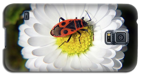 Galaxy S5 Case featuring the photograph White Flower by Elvira Ladocki