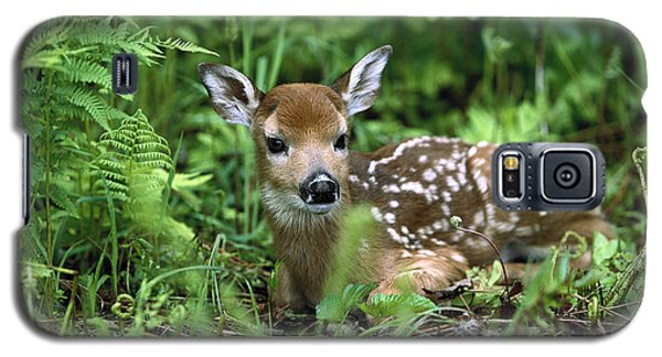 White-tailed Deer Odocoileus Galaxy S5 Case