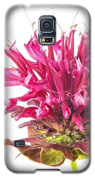 Wild Bergamot Also Known As Bee Balm Galaxy S5 Case by Jim Hughes