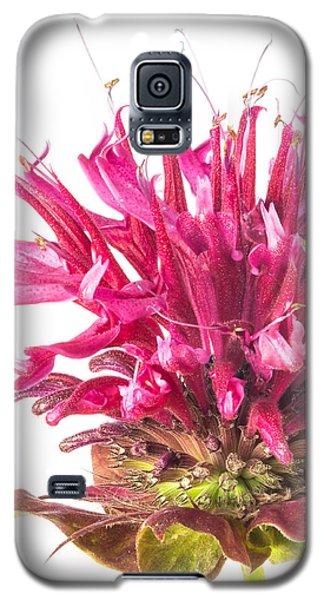 Wild Bergamot Also Known As Bee Balm Galaxy S5 Case