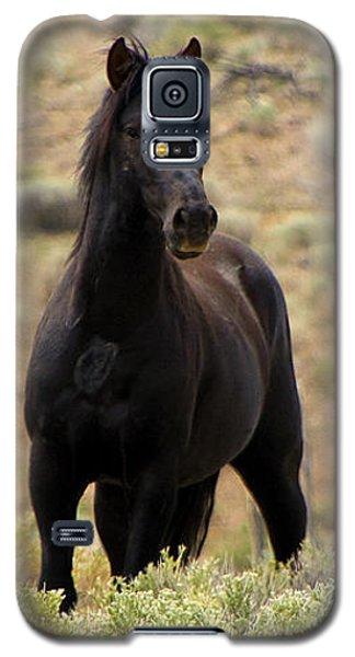 Wild Black Mustang Stallion Galaxy S5 Case