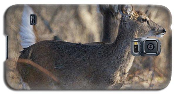 Wild Deer Galaxy S5 Case