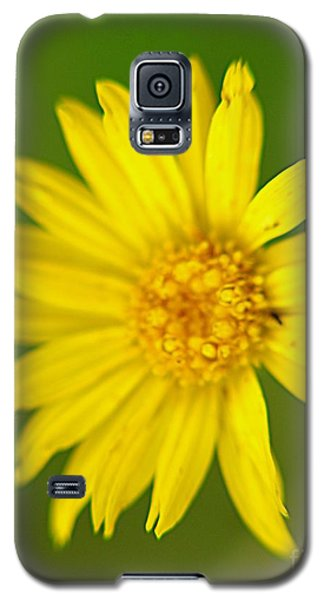 Galaxy S5 Case featuring the photograph Wild Flowers by Janice Spivey
