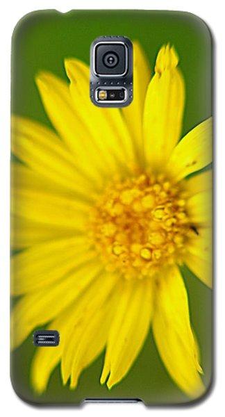 Wild Flowers Galaxy S5 Case by Janice Spivey