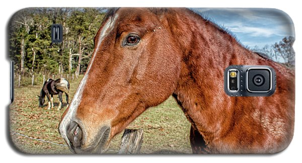 Wild Horse In Smoky Mountain National Park Galaxy S5 Case