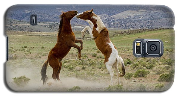 Wild Mustang Stallions Sparring Galaxy S5 Case