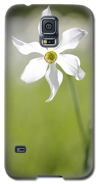 Galaxy S5 Case featuring the photograph Wild Narcissus Glowing In Sunlight by Colleen Williams