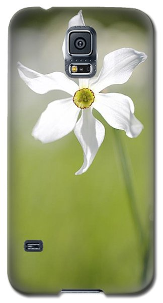 Wild Narcissus Glowing In Sunlight Galaxy S5 Case