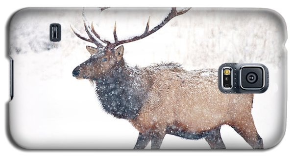 Galaxy S5 Case featuring the photograph Winter Bull by Mike Dawson