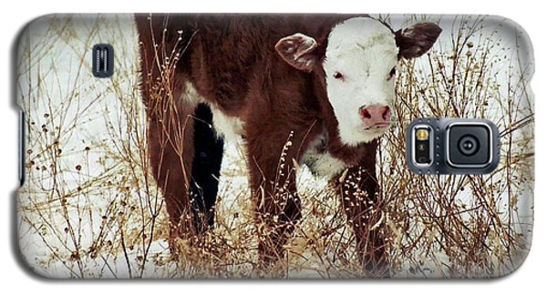 Galaxy S5 Case featuring the photograph Winter Calf by Juls Adams