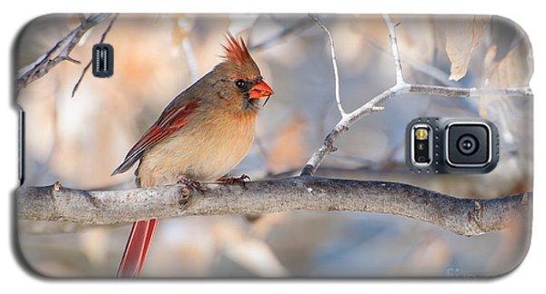 Winter Cardinal Galaxy S5 Case