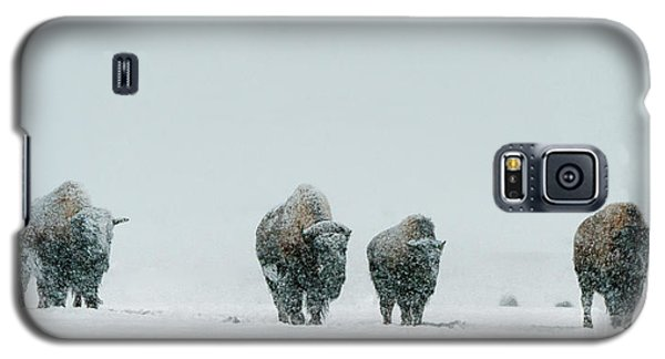 Galaxy S5 Case featuring the photograph Winter's Burden II by Sandra Bronstein